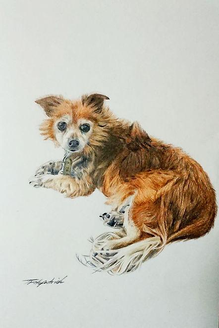 Dog Portrai