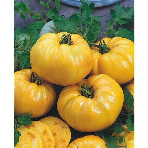 "Plant de tomate ""Summer cider"" bio"