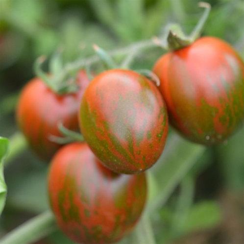 "Plant de tomate ""Black zebra"" bio"