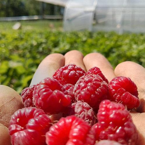 Fruits rouges bio / 125gr - France