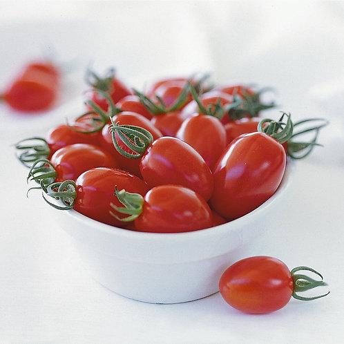 """Plant de Tomate bio """"Capriccio"""""""