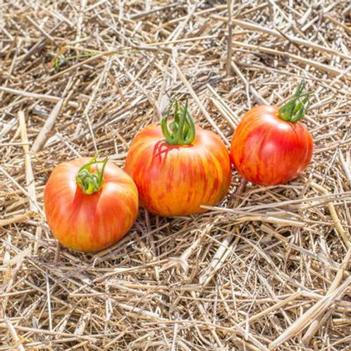 "Plant de Tomate ""Red Furry Boar"" bio en godet"