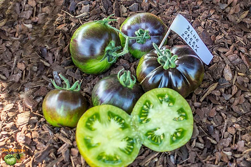 "Plant de Tomate ""Blue green zebra"" bio en godet"