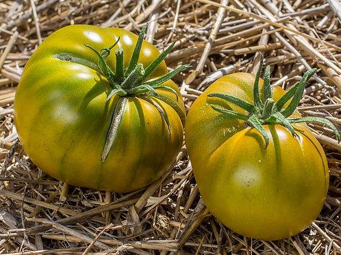"Plant de Tomate bio ""Cherokee Green"" en godet"