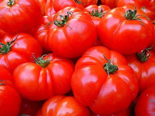 "Plant de tomate ""Calabash rouge"" bio"