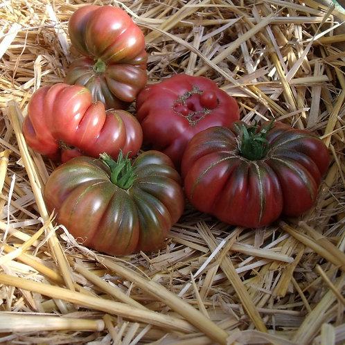 """Plant de Tomate bio """"Purple Calabash"""" en godet"""