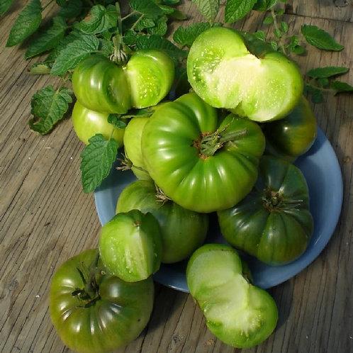 "Plant de Tomate ""Aunt Ruby's German Green"" bio en godet"