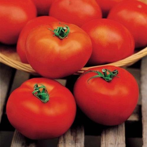 """Plant de Tomate bio """"Hector"""""""