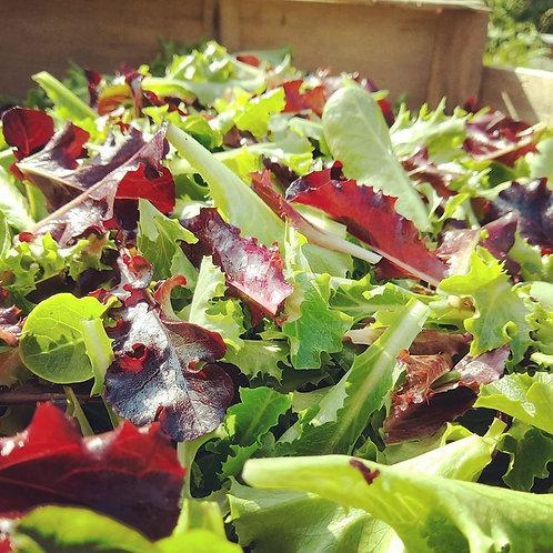 Mesclun de salades en sachet de 300gr - France
