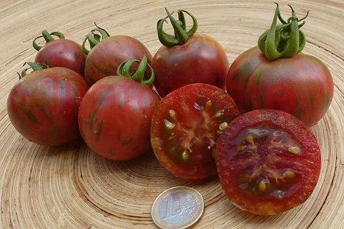 """Plant de Tomate bio """"Violet jasper"""" en godet"""