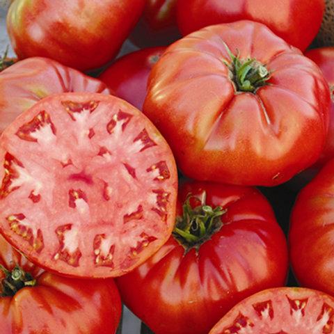 "Plant de Tomate ""Mortgage Lifter"" bio en godet"