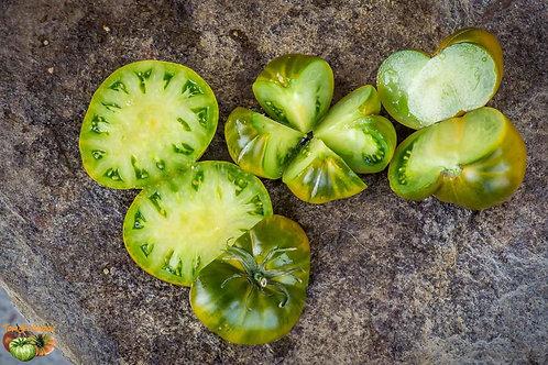 """Plant de Tomate bio """"Charlie Green"""" en godet"""