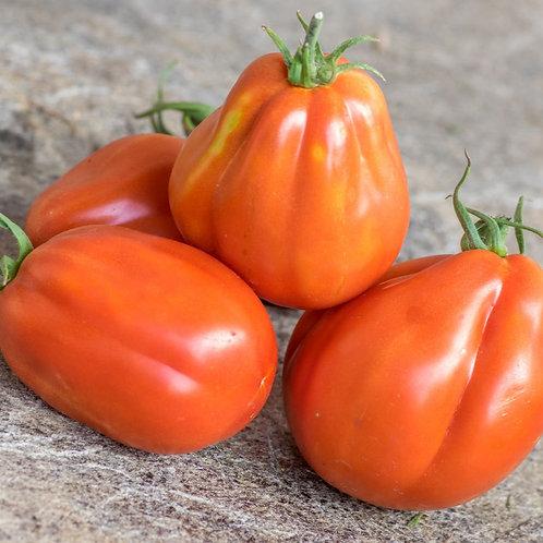 """Plant de Tomate """"Coeur de boeuf de Nice"""" bio en godet"""