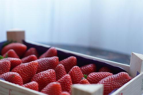 Caissette de fraises bio / 3 kg - France