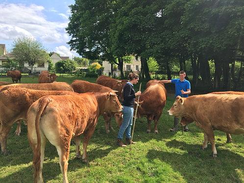 Colis de viande de vache - Retrait à la ferme le 19 décembre - France