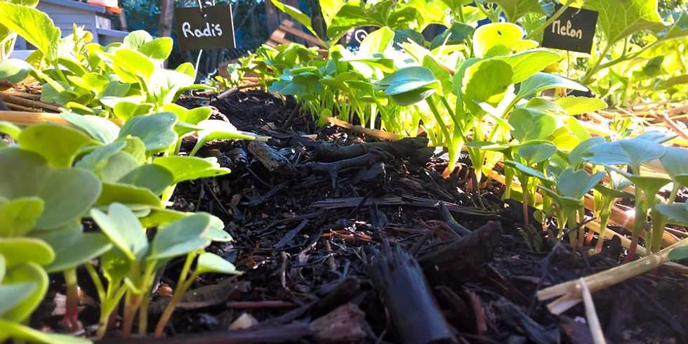 Visite de notre jardin personnel