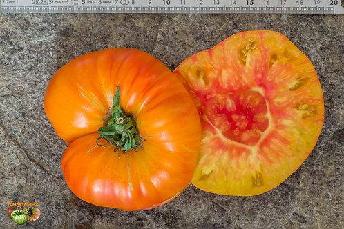 """Plant de Tomate """"Anawine"""" bio en godet"""
