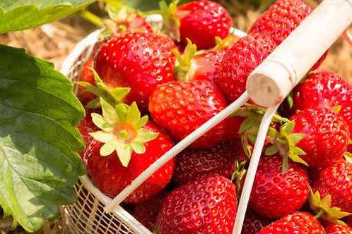 Barquette de fraises bio / 1 kg- France