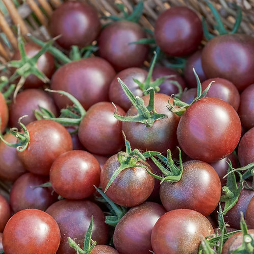 """Plant de Tomate bio """"Black Cherry"""" en maxi-motte"""