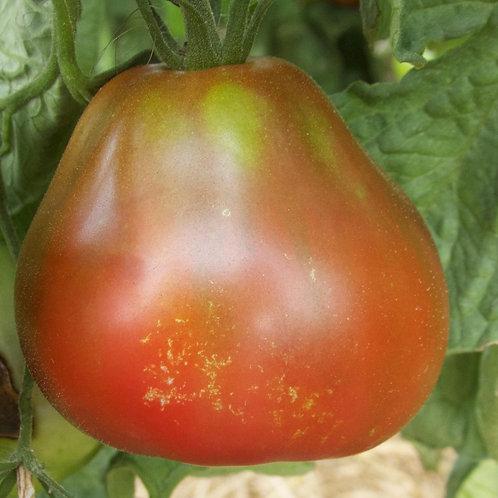 """Plant de Tomate bio """"Bédouin"""" en godet"""