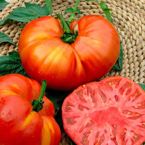 """Plant de Tomate """"BeefSteack"""" bio en godet"""