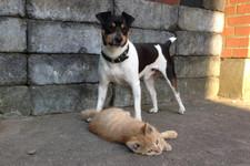 Hund og kat.jpg