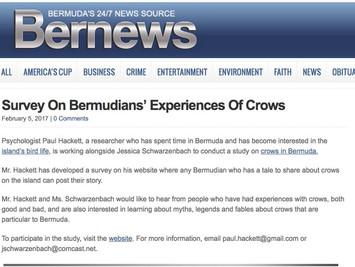Bermuda bird stories survey goes live