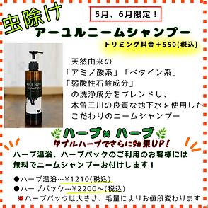 image0 (21).png