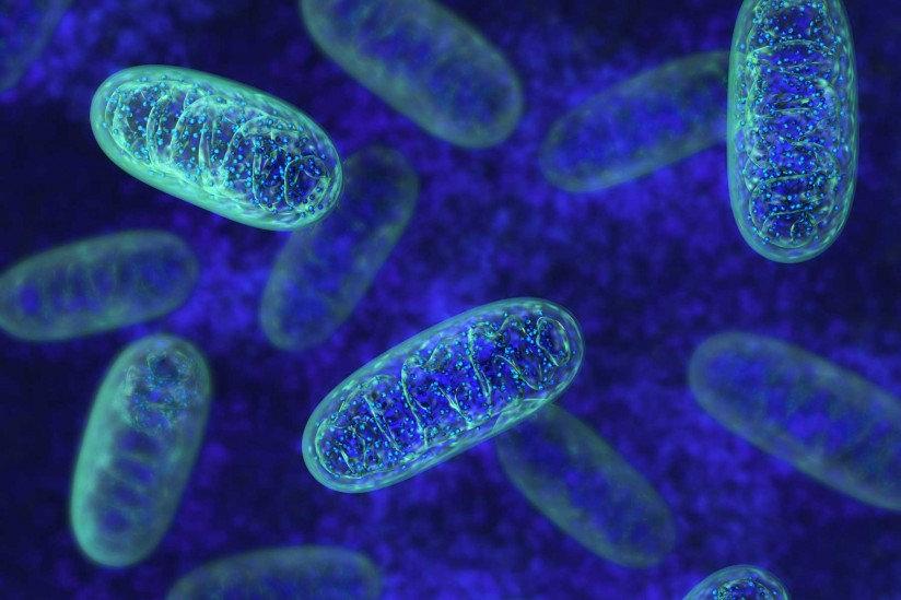 shutterstock_mitochondria_Web-824x549.jp