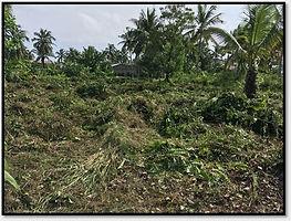 Benin land.jpg