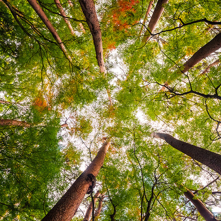 Why you should use FSC certified timber
