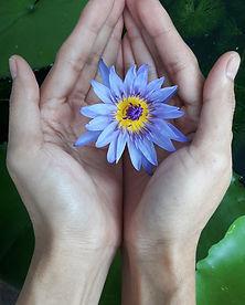 Reiki healing on a flower