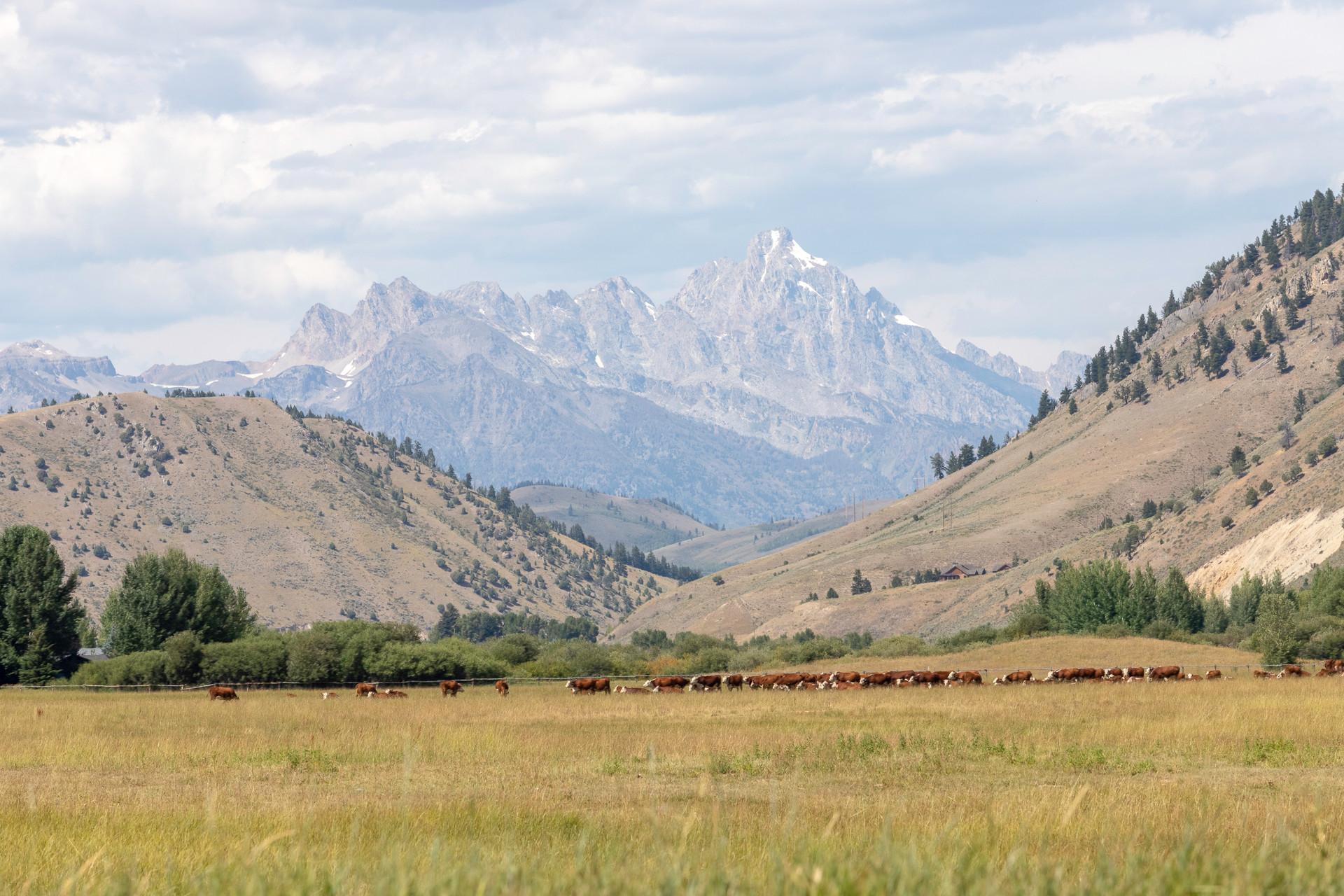 1262 Melody Creek Jackson Wyoming_-23.jp