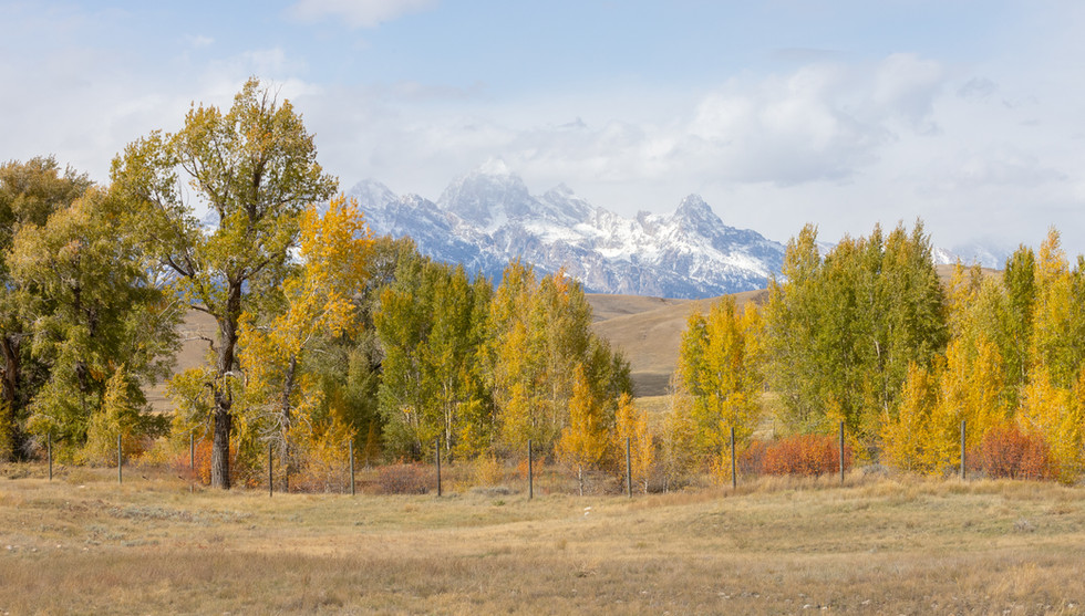 GTNP Elk Refuge October 2019_-2.jpg