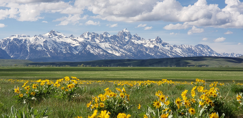 Spring in Wyoming