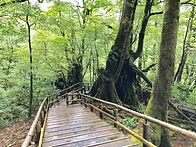 屋久杉森林樂園