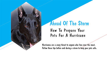 Ahead of the Storm How to Prepare Your Pets for a Hurricane