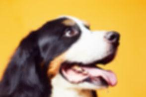 DOG-0339.jpg