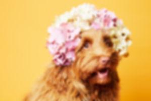 DOG-0012.jpg