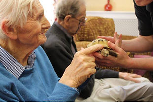 Tom's Talking Reptiles Care home Reptile encounter visit Animal Assisted Therapy Sessions Senior man, Holding Tortoise