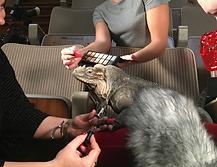 BAFTA Award Best TV Moment, BAFTA Iguana, Planet Earth 2, Iguana Vs Snakes, Tom's Talking Reptiles