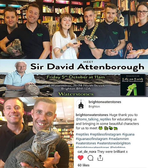 Tom's Talking Reptiles with Sir David Attenborough, Waterstones