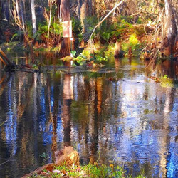 Shingle Creek ..across the street! _STUDENT EDU-Adventure! __www.thebridgelanguageschoolusa