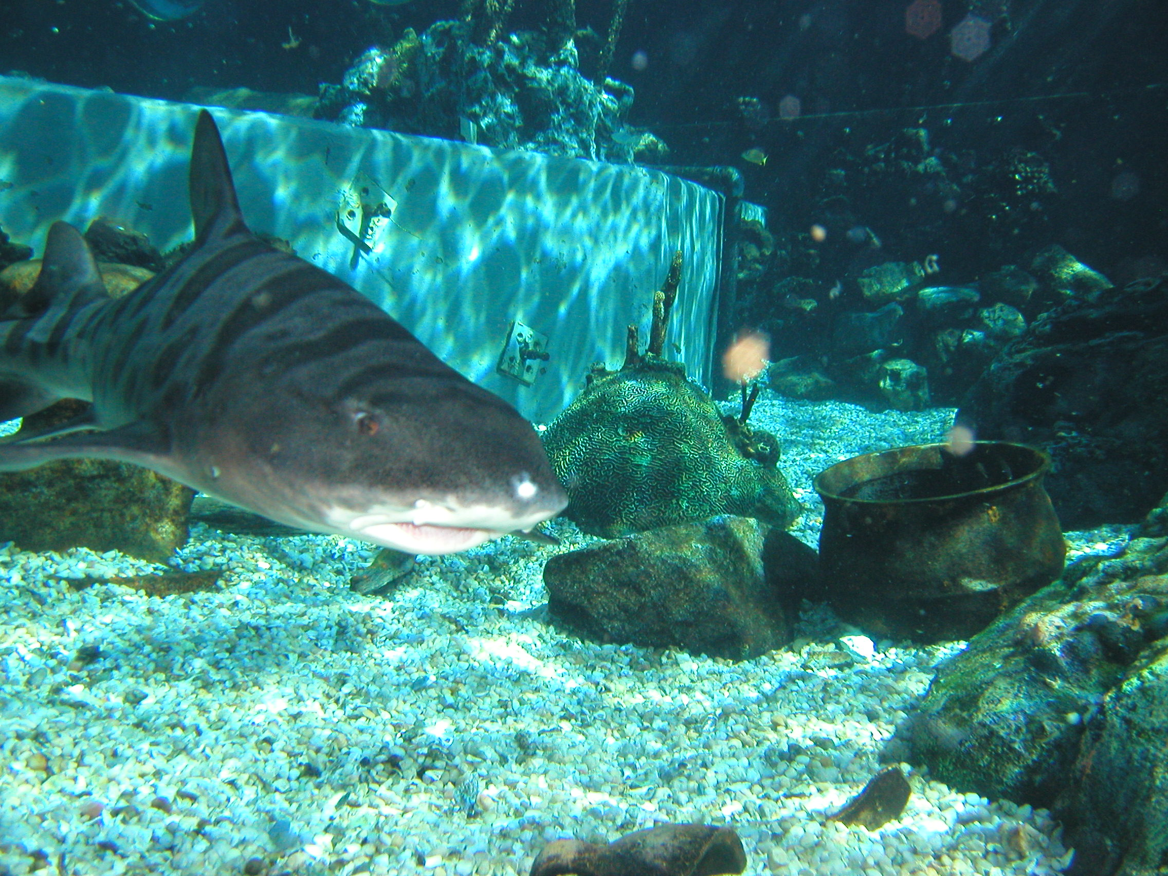 typhoon lagoon shark