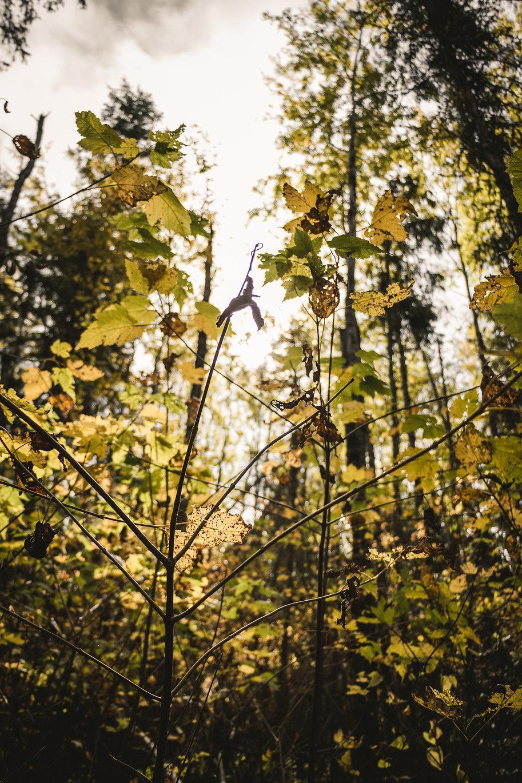 BWRLIFE (Tulabi Falls) - (2017.9.29)-80.