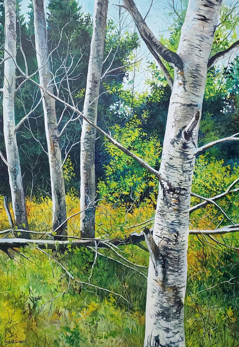06-Trees at Bird's Hill.jpg