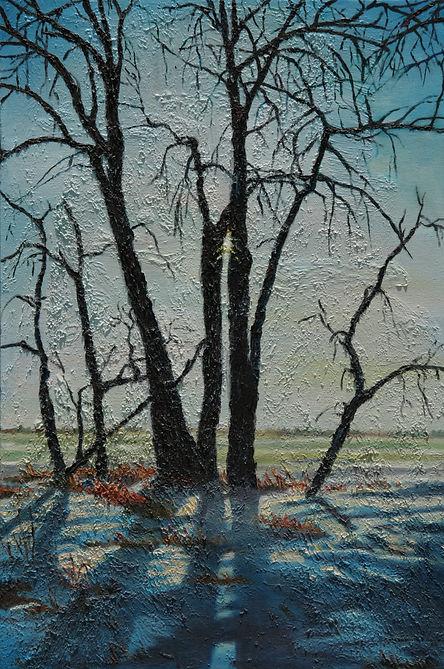 Winter Sun Through Trees .jpg