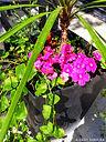 02-Pot de fleurs.jpeg
