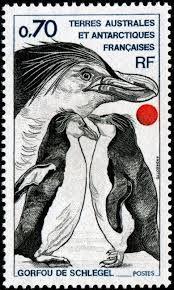 Pingouin 3.jpg