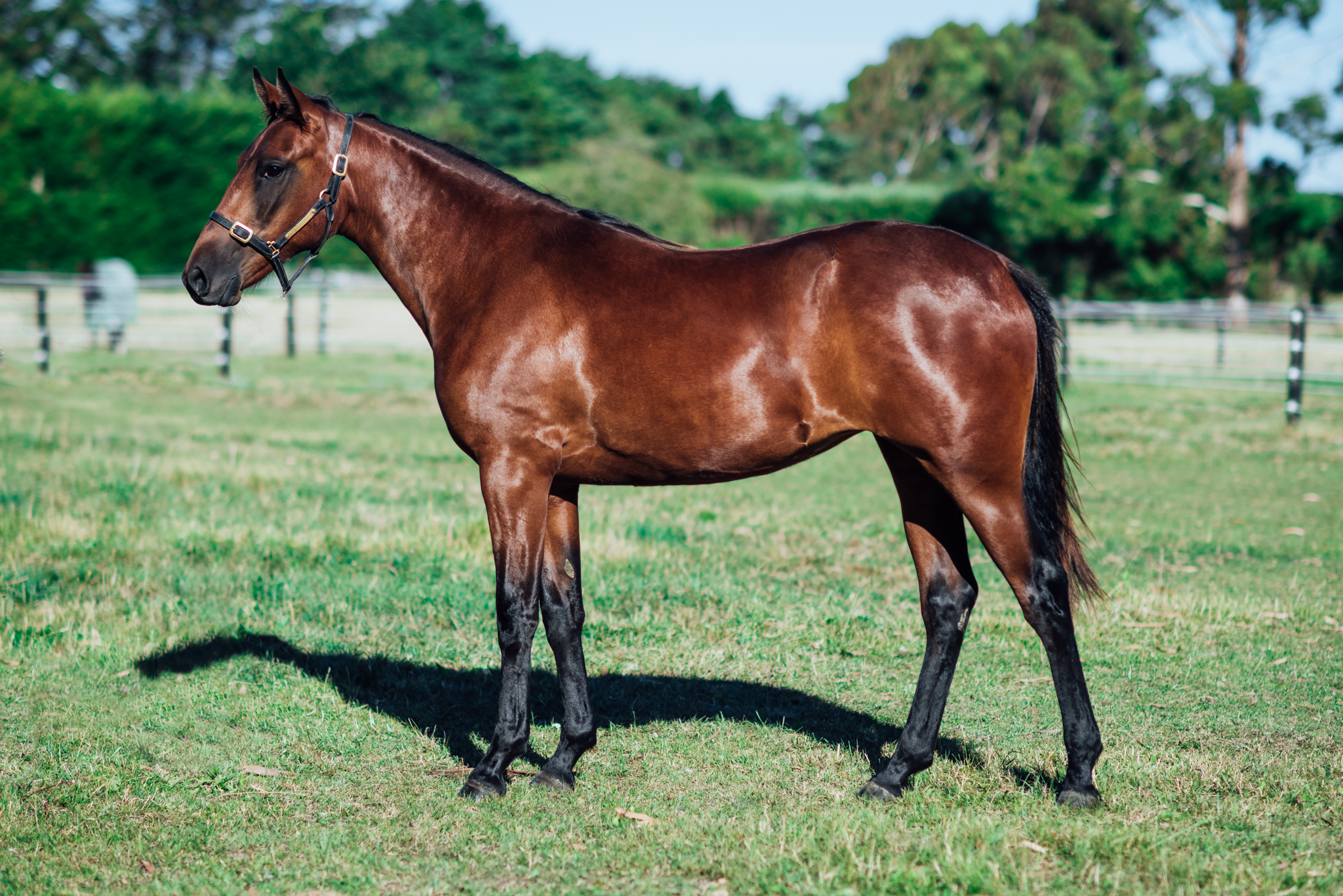 Lot182 Lutetia Midfrew
